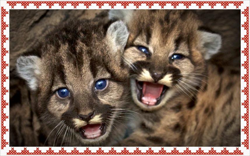 potd-cats_3550002k